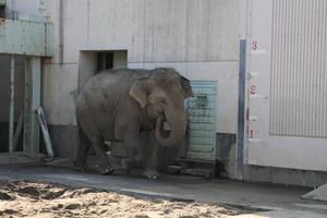 100425_HigashiyamaZoo_elephant.jpg