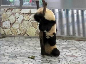 080501_panda2.jpg