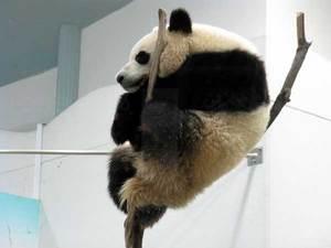 080501_panda3.jpg