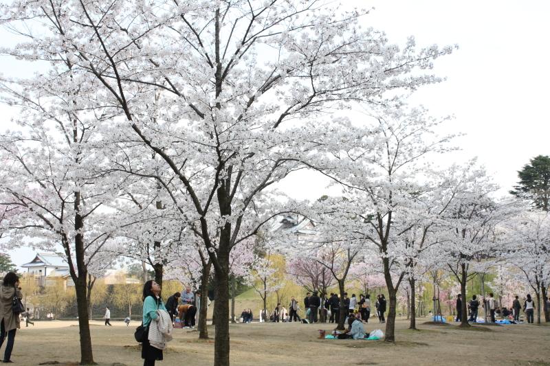 http://www.ndid.net/blog_ndid/image/120415_Kanazawa_05.JPG
