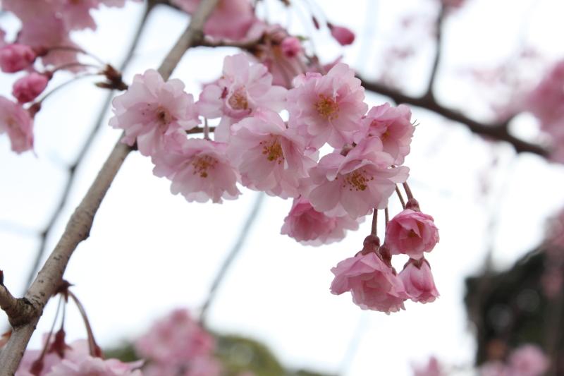 http://www.ndid.net/blog_ndid/image/120415_Kanazawa_06.JPG