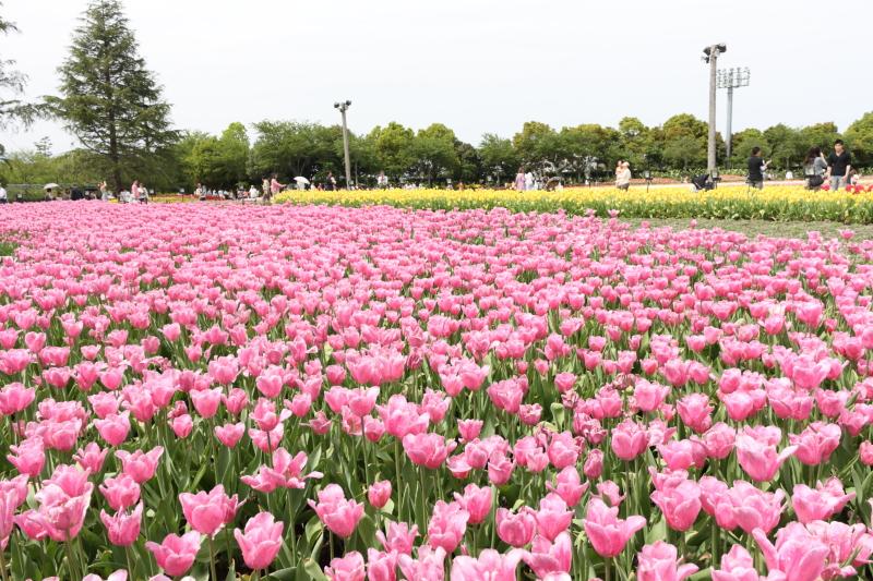 http://www.ndid.net/blog_ndid/image/120429_NabananoSato_08.JPG