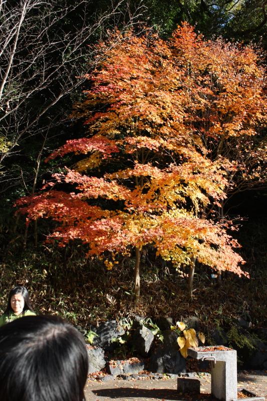 http://www.ndid.net/blog_ndid/image/121118_HigashiyamaZoo_03.JPG